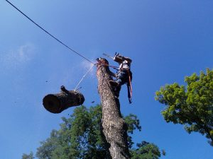 Tree Removal in Willmot