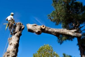 Tree Services in Rhodes