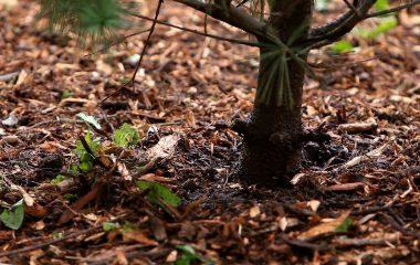 Tree Mulching and Woodchipping