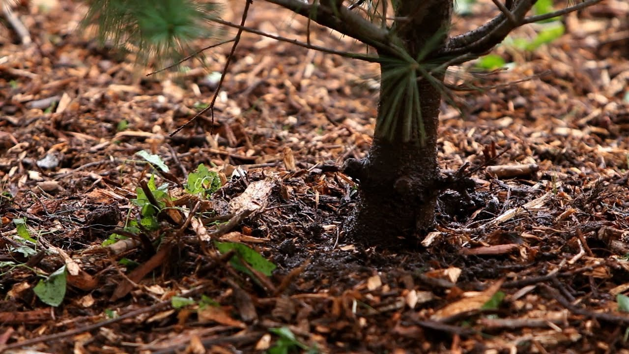 Tree Mulching and Woodchipping